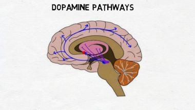 2-Minute Neuroscience: Dopamine