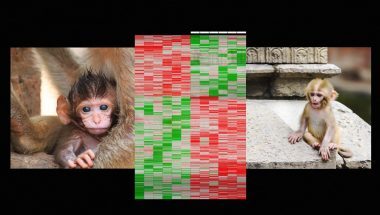 Moshe Szyf: How early life experience is written into DNA.