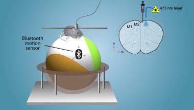 Shining light on neuromodulator function with iTango