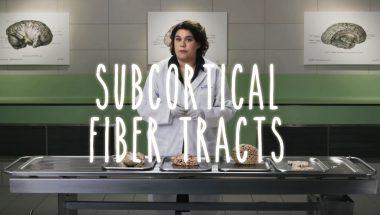 Subcortical Fiber Tracts