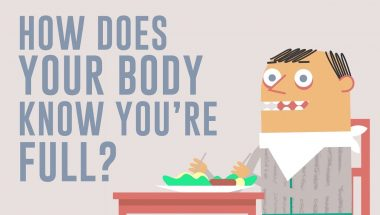 How does your body know you're full?