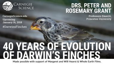 40 Years of Evolution of Darwin's Finches