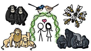Are any Animals Truly Monogamous?